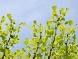 春季嫩枝死亡多,按照这五点,保水又防冻
